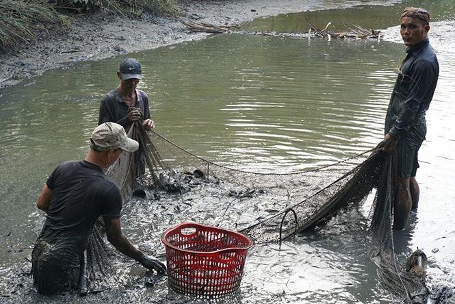 Hiện nay, gia đình bà chuyển sang nuôi cá với diện tích ao tự nhiên hơn 1000m2.
