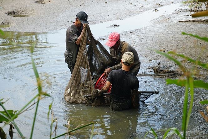 Sau khi bắt cá...