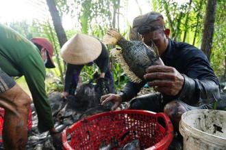 Bà Phan Thị Bé (60 tuổi, ngụ ấp 3, xã Đa Phước, huyện Bình Chánh) cho biết, bà đã sống ở đây từ năm 20 tuổi và mưu sinh trong các vùng ao lầy này.