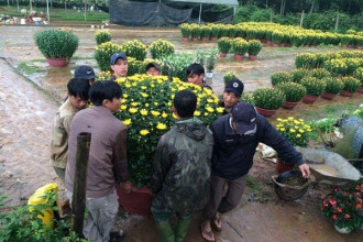 Chuẩn bị hoa bán tết