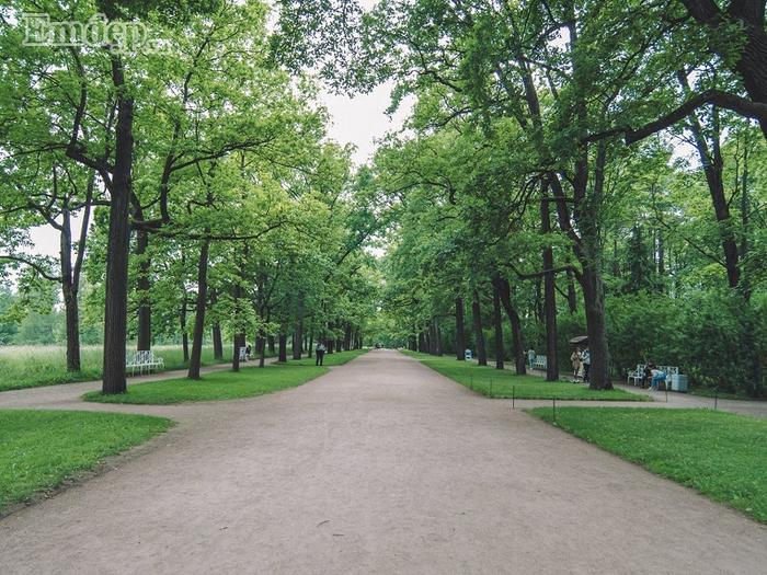 Một cung đường yêu thích của tôi ở công viên Moscow với hai bên đường là cây xanh ngập tràn.
