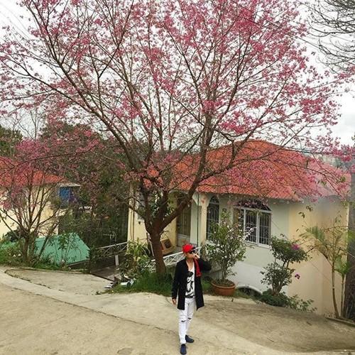 Chắc chắn khi đến với Đà Lạt dịp Lễ hội hoa mai anh đào, các bạn trẻ sẽ cực bất ngờ với loài cây đặc biệt này.