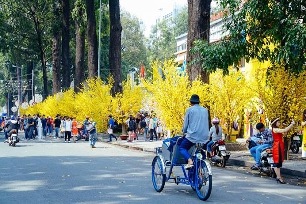 Những ngày giáp Tết, đoạn đường trước Nhà văn hóa Thanh Niên (Phạm Ngọc Thạch, quận 1) trở nên rực rỡ nhờ hàng mai vàng trên phố Ông Đồ, thu hút nhiều bạn trẻ đến đây du xuân - Ảnh: Thiết Nguyễn