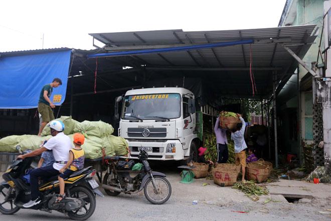 Theo các chủ vựa, nguồn hàng lấy chủ yếu từ các tỉnh miền Tây như Trà Vinh, Đồng Tháp, An Giang…ngoài ra các chủ vựa cũng lấy bắp từ tỉnh Tây Ninh. Tùy theo nhu cầu mà mỗi ngày, các vựa nhập bắp từ vài tấn đến hơn chục tấn.