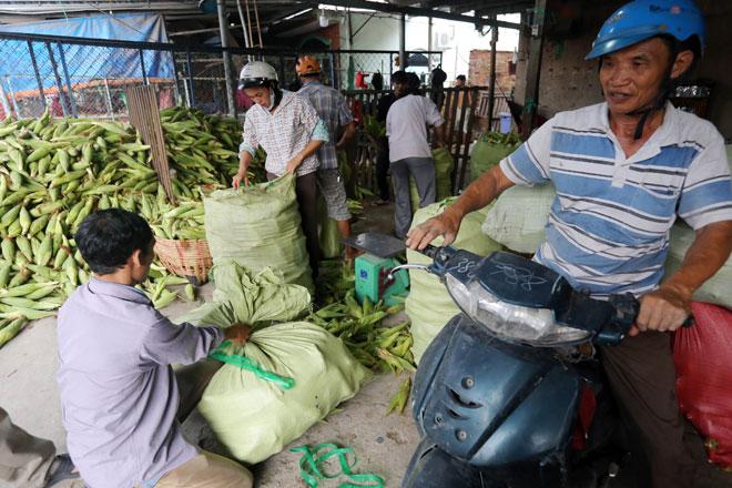 Nhiều người tìm đến chợ bắp để mua về nấu bán dạo. Số khác mua về bỏ mối cho tiểu thương các chợ ở TP và khu vực tỉnh lân cận.