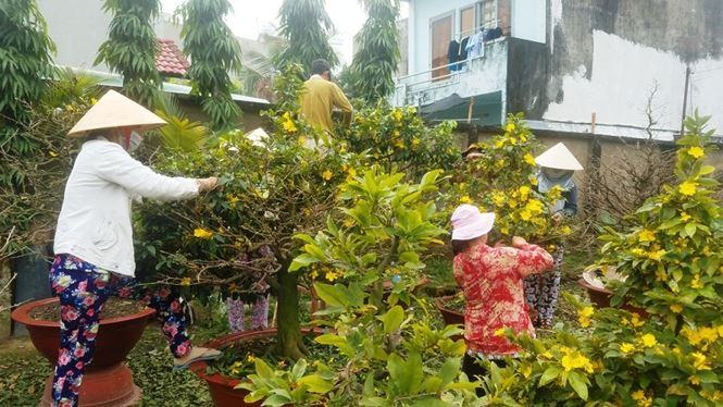 Vườn mai của anh Nguyễn Chí Công, phường Hiệp Bình Chánh, quận Thủ Đức, TPHCM, với hàng trăm gốc mai trị giá hàng tỉ đồng đang được anh chăm sóc tỉ mỉ để phục vụ khách dịp Tết Nguyên đán Mậu Tuất 2018.