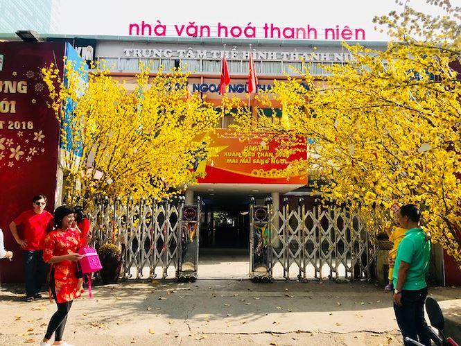 Không trầm lắng như ngày đầu năm, sáng nay, Nhà văn hóa Thanh Niên rộn ràng hơn hết. Du khách đến đây để lưu lại hình ảnh bên những cây mai vàng rực rỡ