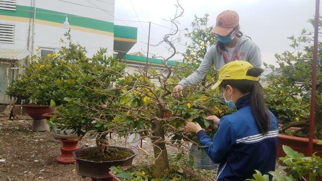 Chị Hà chủ vườn cho biết, vườn chị có những gốc đắt nhất lên đến 700-800 triệu đồng nhưng đã được khách hàng từ Hà Nội vào đặt. Những gốc mai này được để ở nhà vườn và chăm sóc đặc biệt nhằm đảm bảo mai nở đúng dịp khách yêu cầu.