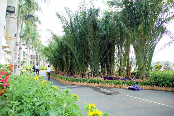 Những ruộng bắp với con đường quanh co, những hàng dừa nước cũng được tái hiện tại hội hoa xuân. Theo ban tổ chức chương trình sẽ khai mạc vào chiều 9.2