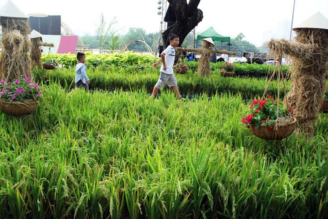 """Những cánh đồng lúa, những con đường mòn ở ruộng lúa, mái nhà tranh…rất làng quê được tái hiện ở hội hoa xuân. """"Nhìn hình ảnh cánh đồng lúa với những người rơm tôi nhớ nhà quá. Tết này tôi không về nên cũng buồn"""", chị Nguyễn Quỳnh Trang ngụ quận 7 chia sẻ."""