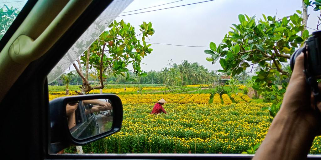 Sau hai giờ ngắm làng hoa cùng các bác nông dân thân thiện, sẵn sàng chia sẻ kinh nghiệm cùng nỗi lo gây ra bởi cơn mưa trái mùa, đoàn lên đường tới xứ dừa Bến Tre