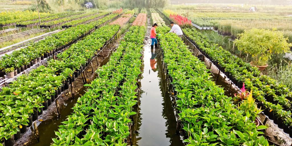 Rời khu vực trung tâm, đoàn tìm đến một ngôi làng nhỏ cách trung tâm thành phố chục cây số. Điểm đặc trưng của các làng hoa ở Sa Đéc là hoa được đặt trên giàn, phía dưới ngập nước.