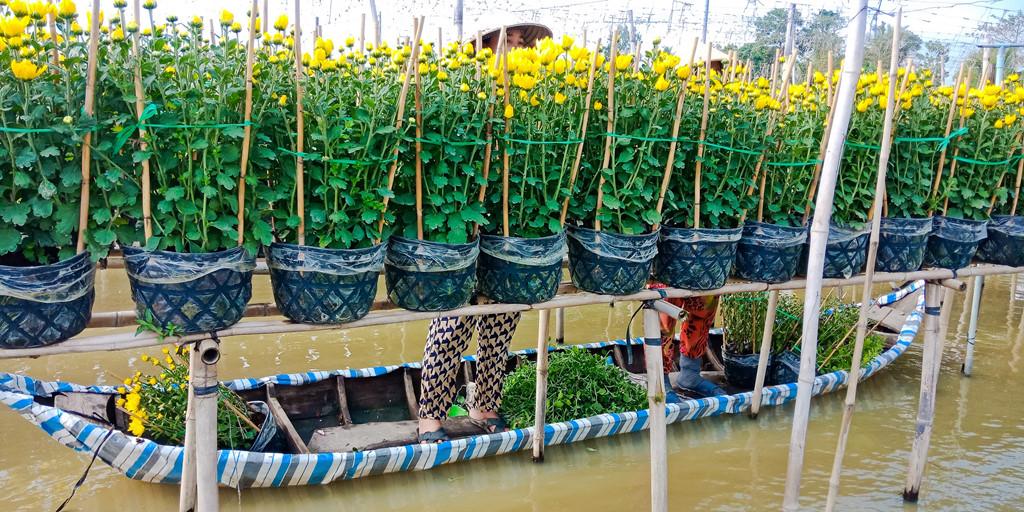 Người nông dân khi chăm sóc cây phải di chuyển bằng thuyền.