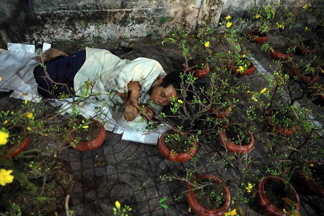 Người bán hoa co ro trong đêm lạnh Sài Gòn