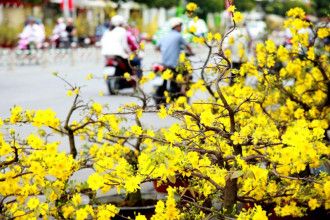 Phố xuân Sài Gòn. Ảnh minh họa: Mễ Thuận