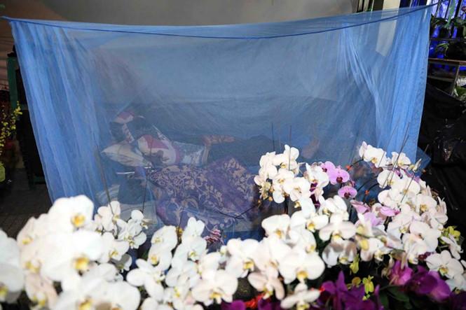 Để chống muỗi đốt nhiều người còn mắc mùng ngủ cạnh vườn hoa ẢNH: ĐỨC ANH