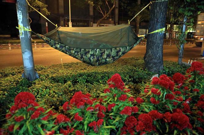 Chiếc võng được mắc cheo leo trên cây ở đường Nguyễn Văn Cừ (Q.5) để canh hoa ẢNH: ĐỨC ANH