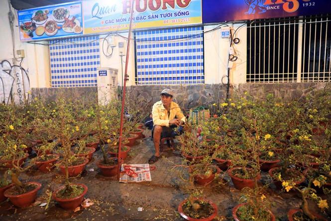 Anh Nguyễn Văn Hải (Đồng Tháp) trắng đêm canh hoa mai trên đường Nguyễn Văn Cừ. ẢNH: ĐỨC ANH