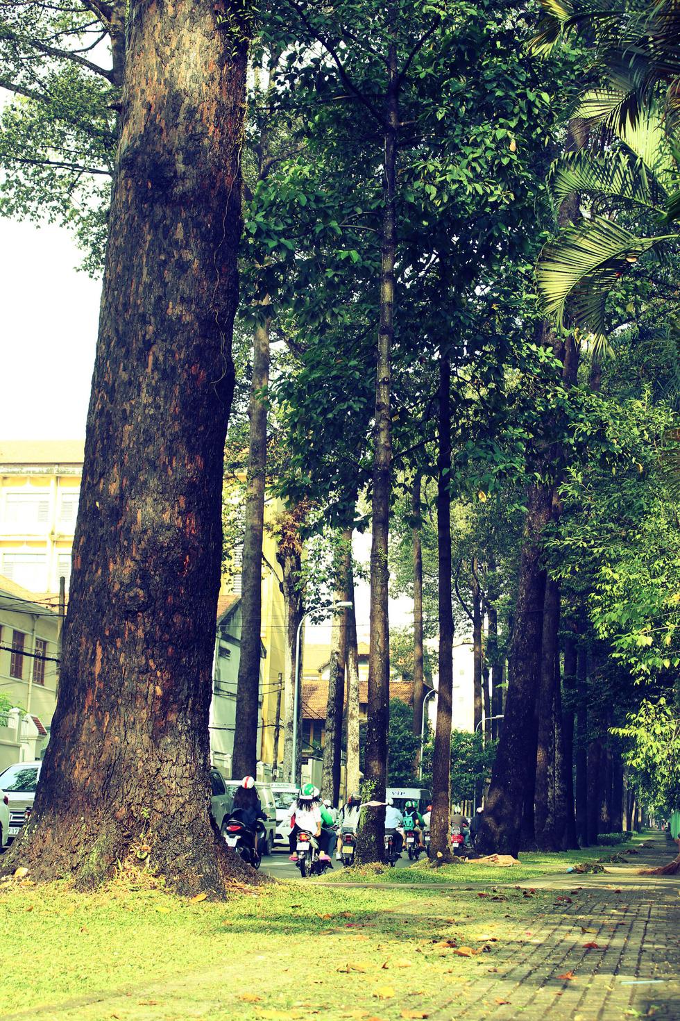 Những gốc cây đồ sộ trên đường Nguyễn Bỉnh Khiêm (quận 1)
