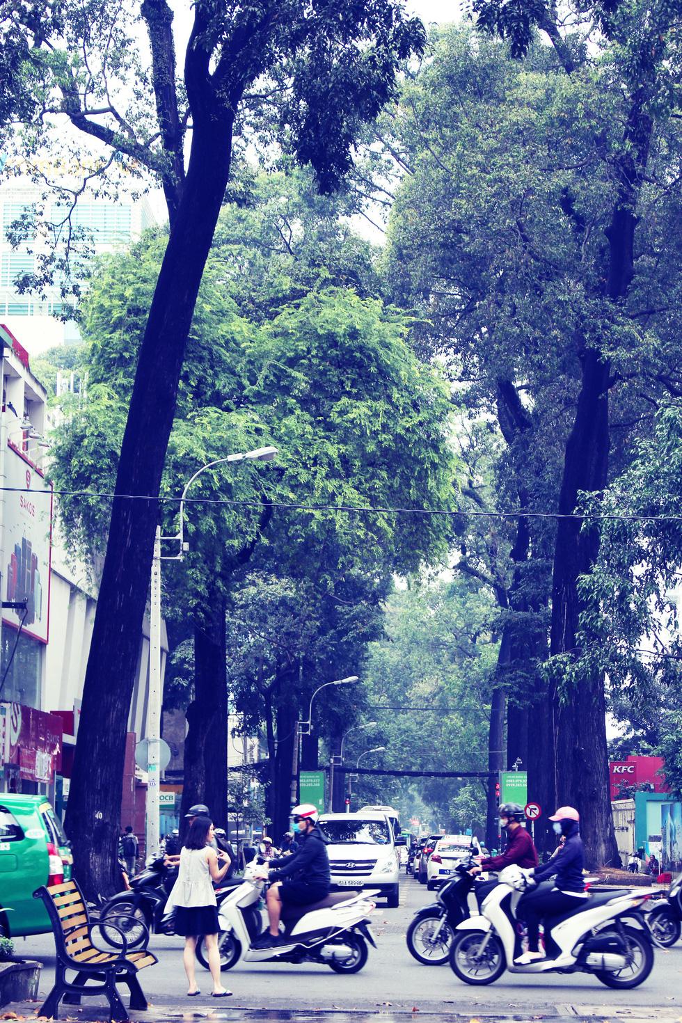 Hàng cây xanh trên đường Phạm Ngọc Thạch (quận 3) che mát cổng Trường đại học Kinh tế TP.HCM