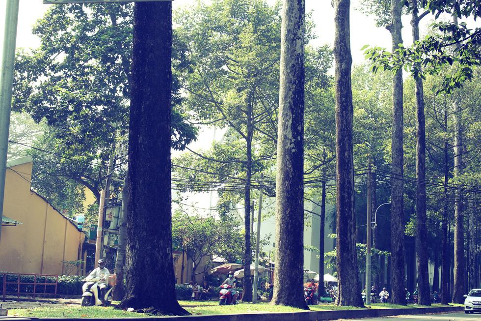 Đường Ngô Gia Tự (quận 5) được hàng cây lâu năm che mát