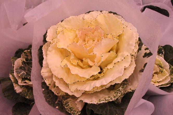 Hoa hồng sa mạc có hình dáng giống như bắp cải Việt Nam, nhưng to và cứng hơn. Chính vì lý do đó, ngoài cái tên hồng sa mạc, loài hoa này còn có tên gọi khác nữa là hoa bắp cải