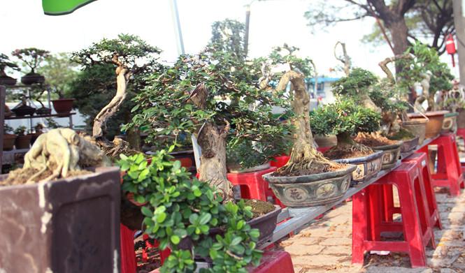 Những chậu bonsai dáng đẹp được nhiều người bày bán