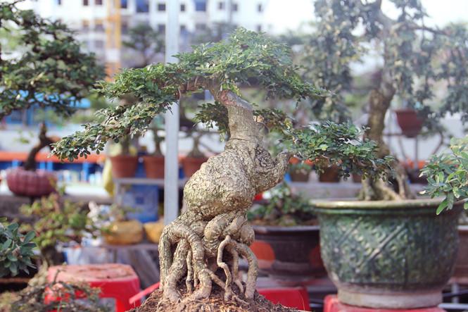 Chậu bonsai đẹp mắt