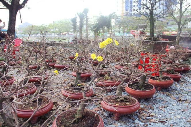 Dọc đường Bến Bình Đông hiện tràn ngập hoa kiểng tết