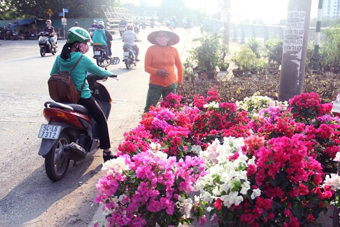 Hoa giấy khoe sắc có giá từ 200.000 - 300.000 đồng/chậu bày bán ở vỉa hè đường Bến Bình Đông