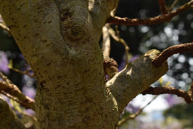Thân cây như vắt kiệt sức mình nuôi những bông hoa bé nhỏ bung nở.