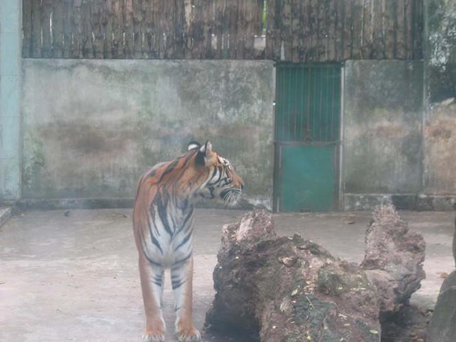 Từng có người xưng là sư phụ hổ lẻn vào chuồng hổ này vuốt râu hùm