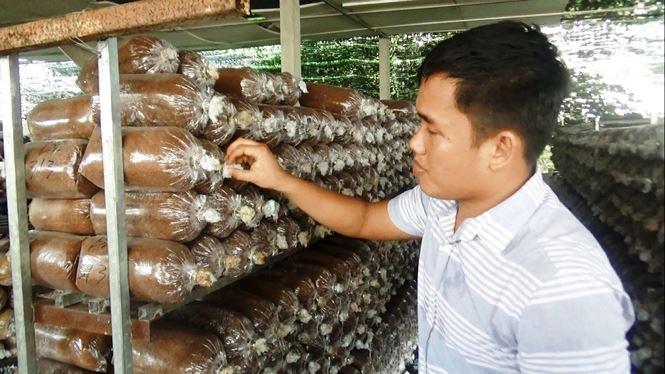 Đến nay, trang trại của anh Thắng có 10 loại phôi nấm khác nhau cung cấp cho thị trường.