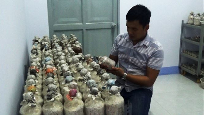 Phòng thí nghiệm của anh Thắng với các loại phôi nấm được ủ cẩn thận.