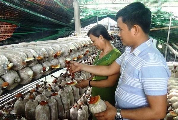 Anh Thắng cùng mẹ mình tại khu vực trồng nấm Linh Chi.