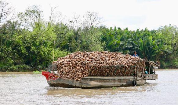 Dòng sông hiền hòa với những chiếc thuyền trở đầy dừa, ảnh: @travelismelivinglife