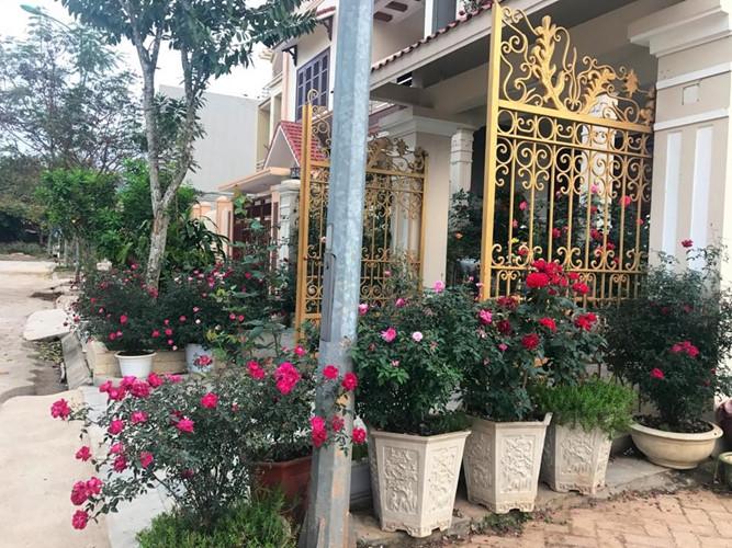 Những chậu hoa hồng được đặt kín ngay từ ngoài cổng. Ảnh: Đời sống & Pháp lý.