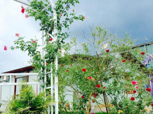 Cổng nhà ấn tượng với giàn hoa hồng leo rực rỡ. Ảnh: Kientrucavas.