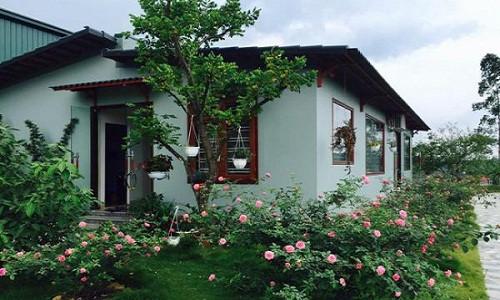 Những khóm hoa hồng xung quanh nhà tạo nên khung cảnh thơ mộng và bình yên. Ảnh: Kientrucavas.
