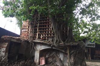 Chuồng nuôi chim được nâng đỡ bởi cây bồ đề.