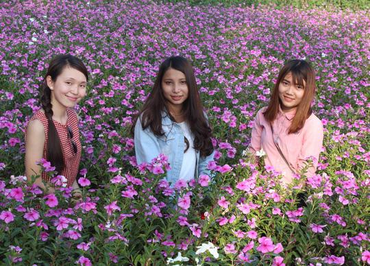 Mỗi ngày ruộng hoa tiếp đón hàng trăm bạn trẻ đến tham quan và chụp hình.