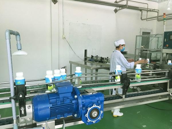 Quy trình sản xuất sữa thanh trùng khép kín tại Green Noen. Nguồn sữa được lấy từ những chú bò sữa được nuôi tại nông trang.