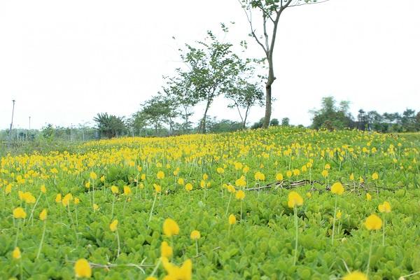 Đến với Nông Trang Xanh bạn dễ dàng bắt gặp những trảng hoa đậu phộng tươi mát.