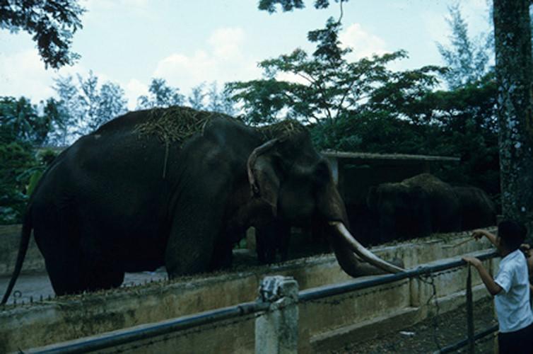 Chuồng voi ở Thảo Cầm Viên Sài Gòn. Ảnh: Vietnam Center and Archive.