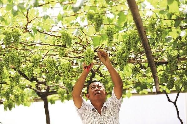 Nhiều người tại TP HCM tìm đến ông Ở để mua các cây giống về trồng ở trước nhà, sân thượng. Ảnh: Tinnhanhchungkhoan.