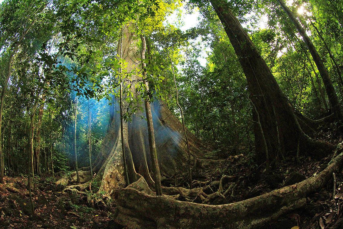 Và Nam Cát Tiên ban tặng cho tôi những hình ảnh cây cổ thụ đẹp mê hồn.