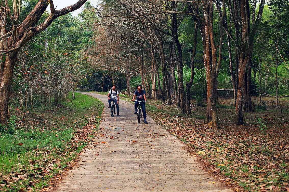 Rừng nguyên sinh Nam Cát Tiên vào mùa khô rất đẹp. Thư thả dạo xe đạp trong rừng là thú vui không dễ có được.