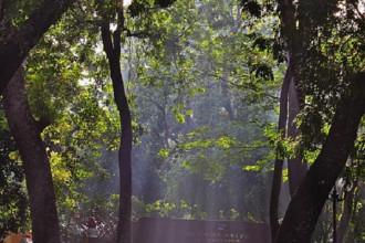 Sài Gòn là góc công viên bình yên mỗi sáng sớm (photo by: Quan Tran Minh)