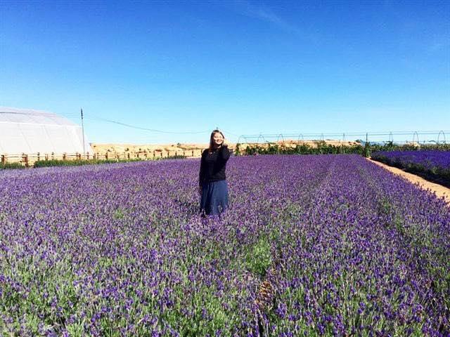 Cánh đồng hoa lavender tím biếc tọa lạc tại gần đồi chè Cầu Đất, trở thành điểm đến không thể bỏ qua với mỗi du khách đến với Đà Lạt trong những ngày gần đây.