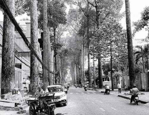 Với những người yêu Sài Gòn, những hình ảnh nhẹ nhàng cũng hóa thân thương (photo by Avery Krieger)